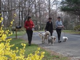 residents walking their dogs